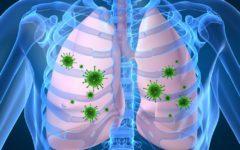 lungs_terminix