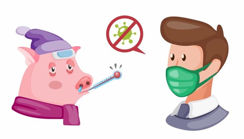 coronavirus-en-cerditos