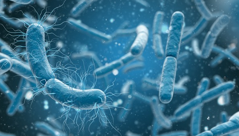 microbacteria