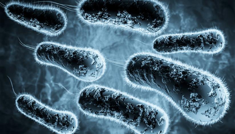 tbc-bacterias